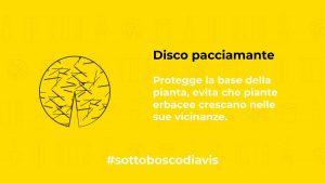 DAI VITA AL #SOTTOBOSCODIAVIS